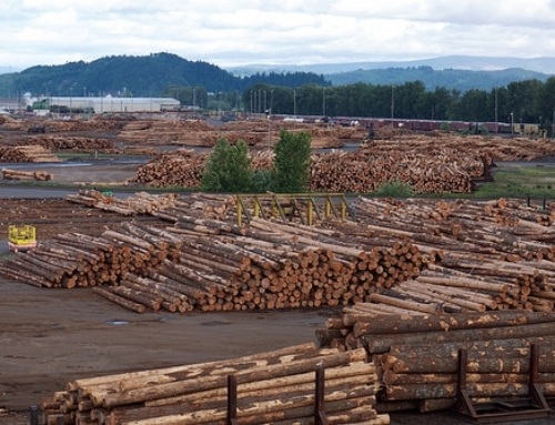 FOREST INK: Why can the Asian markets pay more for B.C. logs than our local mills?