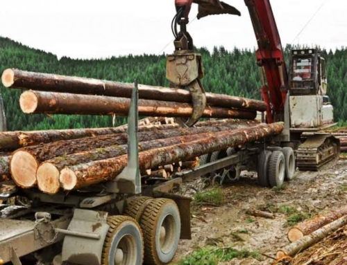 Teal Jones shutting down coastal logging operations