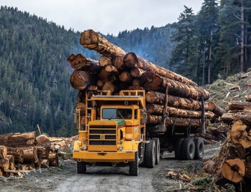 STANDING TALL: For some, B.C.'s forest industry is the best office in the world