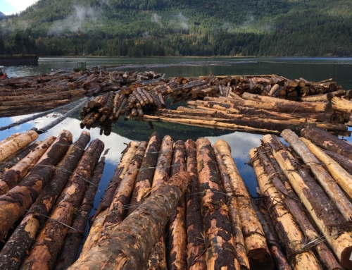 B.C. to protect 353,000 hectares of forest with old-growth trees from logging until new plan is developed