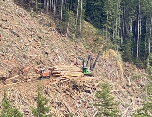 Activists wait for RCMP to clear old-growth logging blockades on Vancouver Island